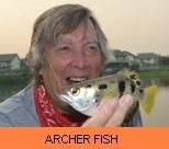 Photo Gallery - Archer Fish