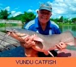 Palm Tree Lagoon Gallery - Vundu Catfish