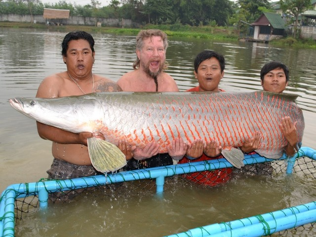 Johnny - Arapaima