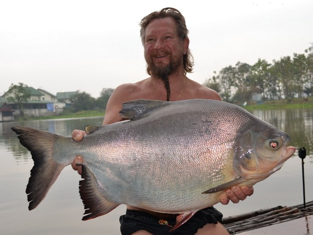 Johnny - Pacu