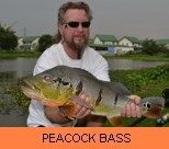 Photo Gallery - Peacock Bass