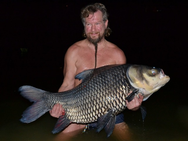 Siamese Carp - Johnny
