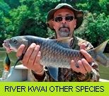 River Kwai Noi Gallery - Other Species