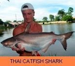 Photo Gallery - Thai Catfish Shark