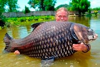 Thai Fish Species - Siamese Carp