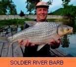 Photo Gallery - Soldier River Barb