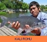 Photo Gallery - Kali Rohu
