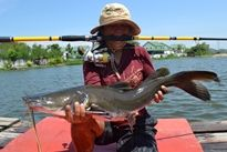 Thai Fish Species - Salween Catfish