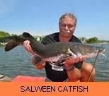 Photo Gallery - Salween Catfish