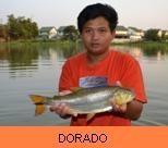 Photo Gallery - Golden Dorado