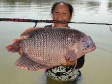 Giant Gourami IGFA All Tackle Record 6.3kg