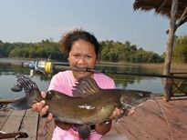 Yellow Catfish Khao Laem Dam