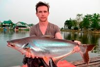 Thai Fish Species - Catfish Shark