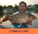 Photo Gallery - Common Carp