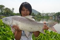 Thai Fish Species - Small Scale Mud Carp