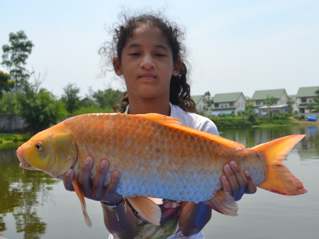Fishing holidays at palm tree lagoon in thailand thai for Giant koi carp