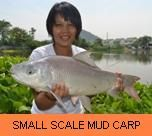 Photo Gallery - Small Scale Mud Carp