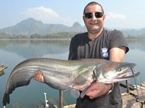 Fishing in Thailand - Wallago Attu