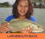 Photo Gallery - Largemouth Bass