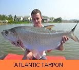 Photo Gallery - Atlantic Tarpon