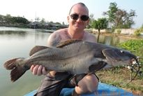 Thai Fish Species - Chinese Highfin Catfish