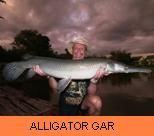 Photo Gallery - Alligator Gar
