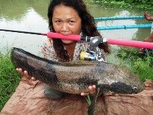 Emperor Snakehead IGFA All Tackle Record 5.15kg