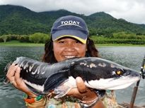 Thai Fish Species - Giant Snakehead