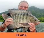 Thai Fish Species - Tilapia