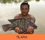 Photo Gallery - Tilapia