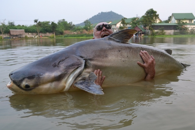 Mekong Catfish Fishing Thailand - Thai Fish Species ...