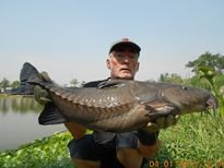 Thai Fish Species - Ripsaw Catfish