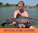 Thai Fish Species - Crystal Eyed Catfish