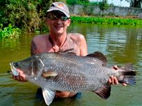 Thai Fish Species - Barramundi