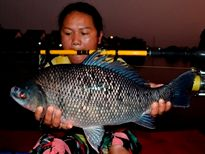 Thai Fish Species - Bony Lipped Barb