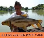 Photo Gallery - Juliens Golden Price Carp