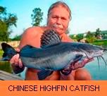 Photo Gallery - Chinese Highfin Catfish