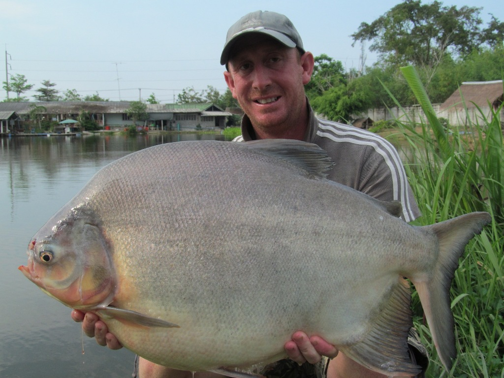 Fishing holidays at palm tree lagoon in thailand thai for Pez cachama