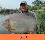 Photo Gallery - Pacu