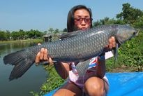 Thai Fish Species - Chinese Black Carp