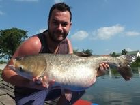 Thai Fish Species - Silver Carp