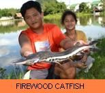 Photo Gallery - Firewood Catfish