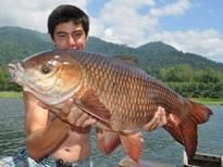 Fishing in Thailand - Rohu (Indian Carp)