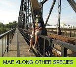 Mae Klong River Gallery - Other Species
