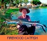 Thai Fish Species - Firewood Catfish