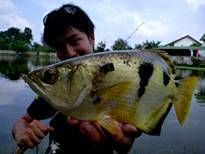 Thai Fish Species - Archer Fish