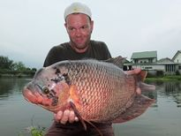 Thai Fish Species - Giant Gourami