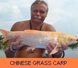 Photo Gallery - Chinese Grass Carp