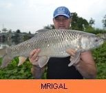 Photo Gallery - Mrigal