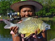 Golden Bellied Barb IGFA All Tackle Record 1.85kg